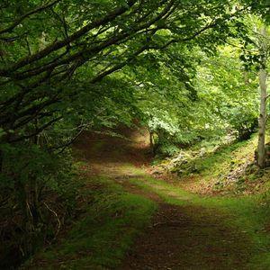 Naturaleza: La importancia de los bosques