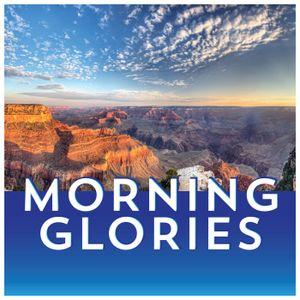 Morning Glories - July 24, 2017