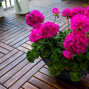 Tillväxthämningsmedel i krukväxter farligt för komposten