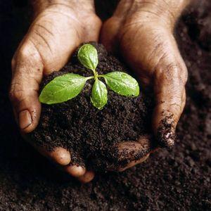 Off Script 30: Stewarding the Earth