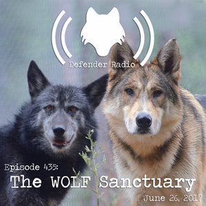 435: The WOLF Sanctuary