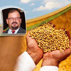 Chuvas constantes paralisam a colheita da soja em Nova Mutum (MT)