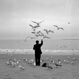 Seabirds' Siesta