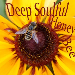 Deep Soulful Honey Bee