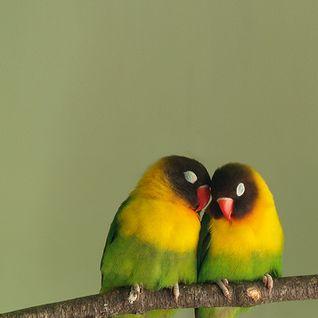 Birdland Universe