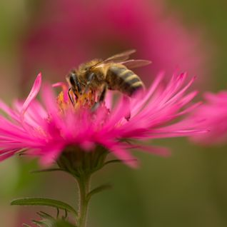 bourdonnements d'abeilles yzeron mai 2015