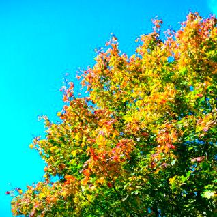 Autumn Feel | Mixtape October 2011