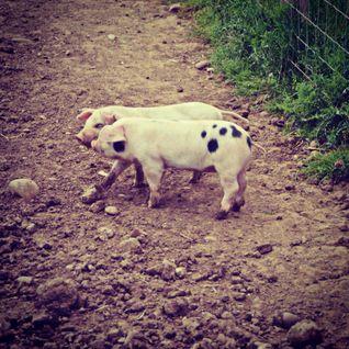 #InGoodTaste: Todenham Manor Farm -- @z1radio