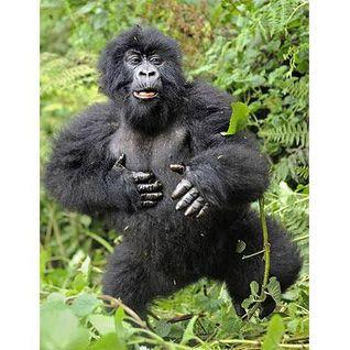 Gorillaz on Parade - Priceless 2013