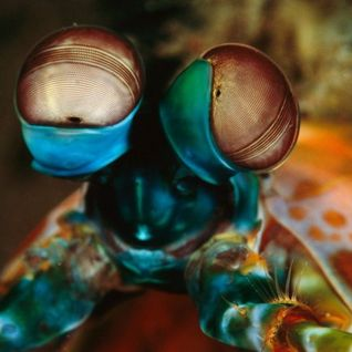 Muzka-Dead Shrimp Blues