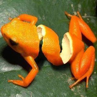 Inside The Orange Peel Mix 2