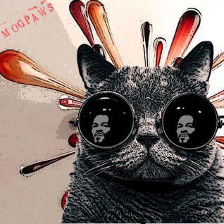 Mogpaws - Where'd the cat go?