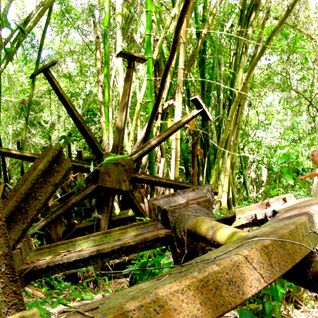 Jungle Rollercoaster