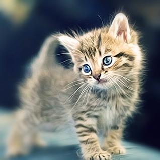 Die Kitten Tape 17