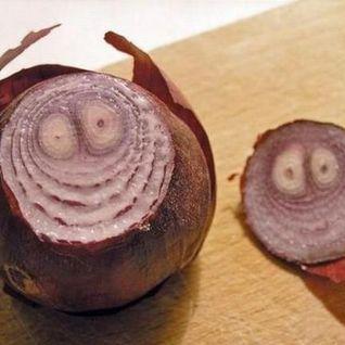 Spring Onions 2013