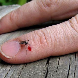 Mosquito Beats #3 - Muchas Matthias #Latino #Pacifico #Salsa (56'')