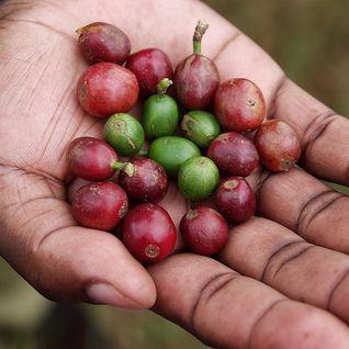 Bugalu Sound - African Seeds