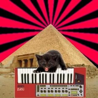 My cat loves synthesizers