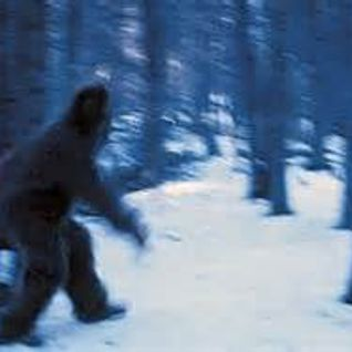 Yeti What Are You? I'm a Yeti