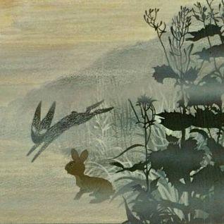 Follow the black rabbit