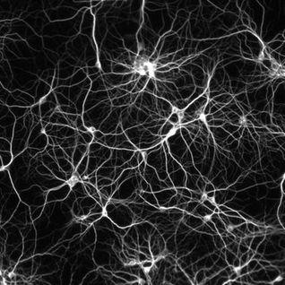 Neurofunky