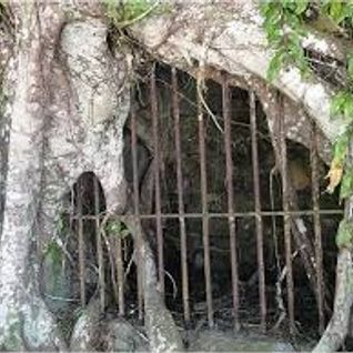 The Lockdown With Crimborella Ep2 - Lockdown Inna Jungle