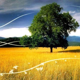 Solaris2222 - Summer Breeze (2004)