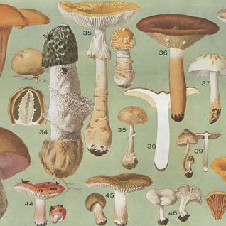 Les Animaux - Magic Mushroom Mixtape