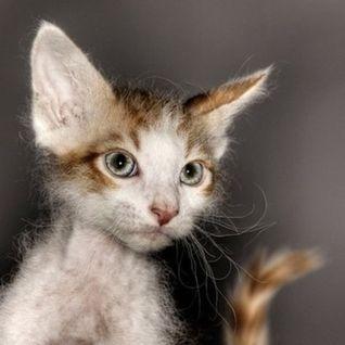 Die Kitten Tape 1