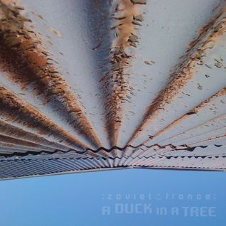 A Duck in a Tree 2015-02-14 | The Raising of the Fundament