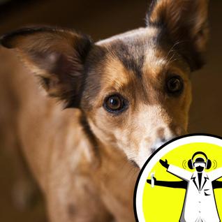 A Dog's Life: Intelligence and Inbreeding