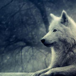 le cri des loups part 2