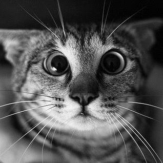 Die Kitten Tape 10