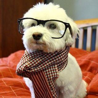 Never trust a Hipster