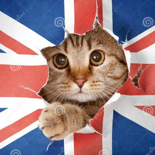 A Kitten from Great Britain