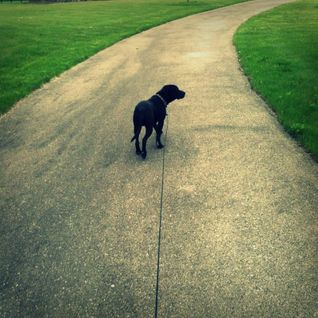 Music for dog walking