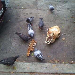 The Pigeoncast