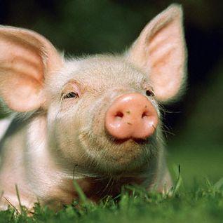 Filthy Noize's 'Een gat is een gat, zei de boer en hij kroop op zijn varken' Mixtape