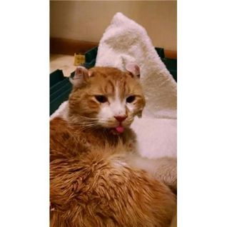 Pet Radio-Freeway the Cat and the Man who Saved Him and Deb Barnes