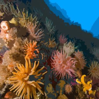Touching The Anemones