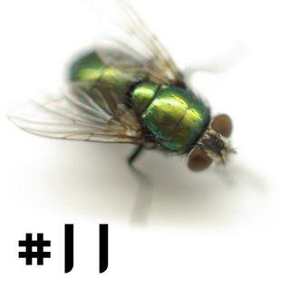 #11 Grün-schimmernde-Fliege September MIX 2013