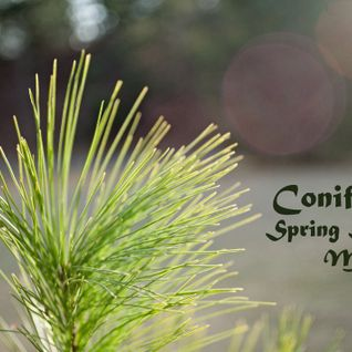 Spring Session Mix @ Coniferous