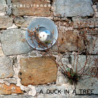 A Duck in a Tree 2013-07-27 | An Unrecorded Existence