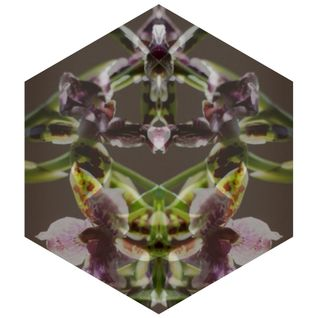 Black Orchid Mix