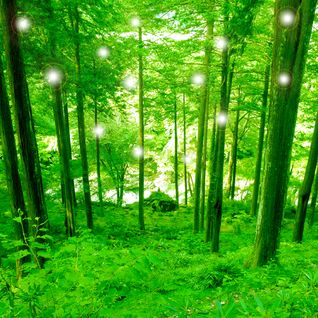 Celestial Nature