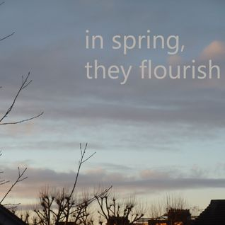 In Spring, they flourish