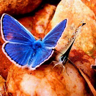 Nass K. - 2 Butterflies (4i & Di special mix)