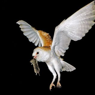 Owl Trap mix - April 2015 (Chilltrap & Chillstep)