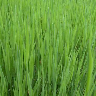 Bill Shakes 42 - Grass