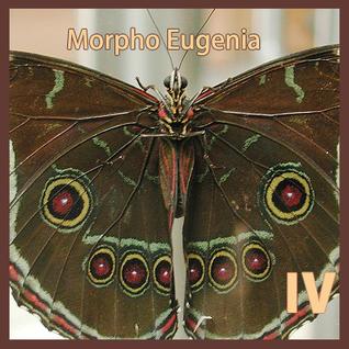 Morpho Eugenia IV